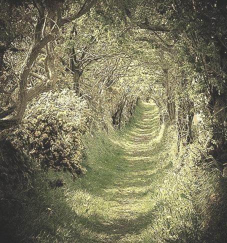 Tree Tunnel, Ballynoe Co Down, Ireland