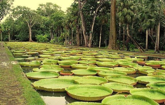 Sir Seewoosagur Ramgoolam Botanical Garden, is a popular tourist attraction near Port Louis, Mauritius, and the oldest botanical garden in the Southern Hemisphere. The...
