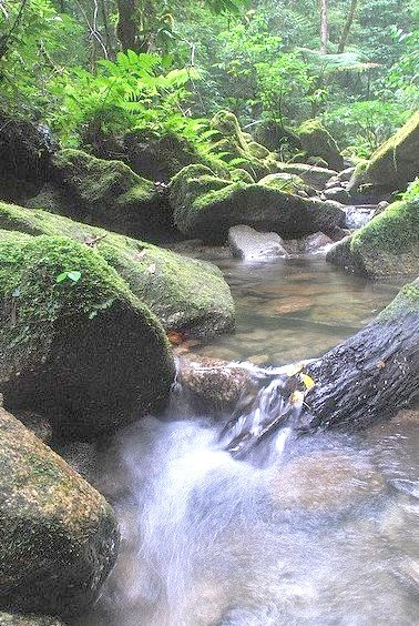 River through El Cortecito, Cusuco National Park, Honduras