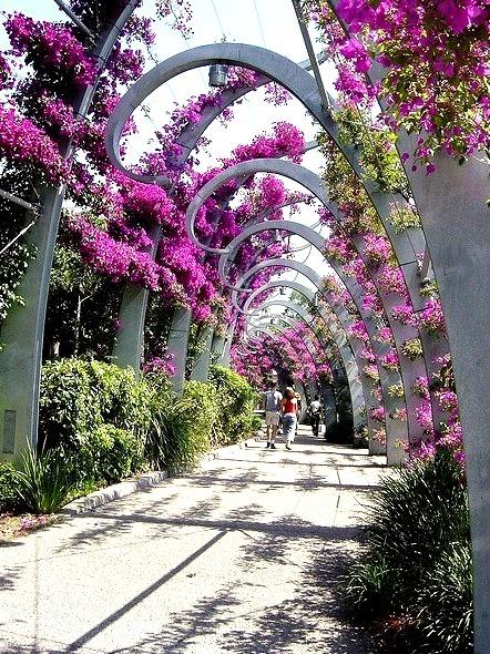 Brisbane flower bower, Queensland, Australia