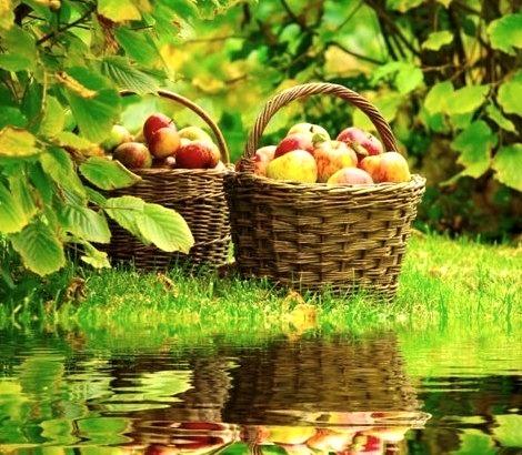 Apple Harvest, Grand Rapids, Michigan
