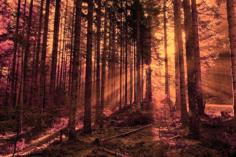 Sun Ray Forest, Hungary
