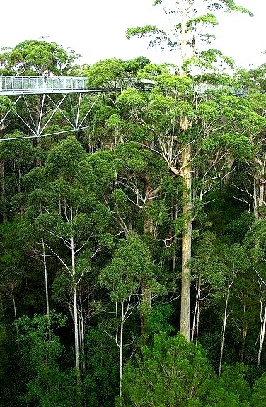 The Tree Top Walk at the Valley of the Giants, western Australia